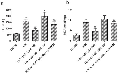 Effects of miR-93 on H/R-induced injury in H9c2 cells.