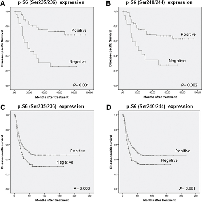 mTOR activation is associated with favorable prognosis in HNSCC patients.