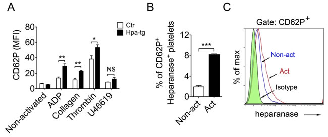 Association of heparanase and CD62P expression in mouse and human platelets upon activation.