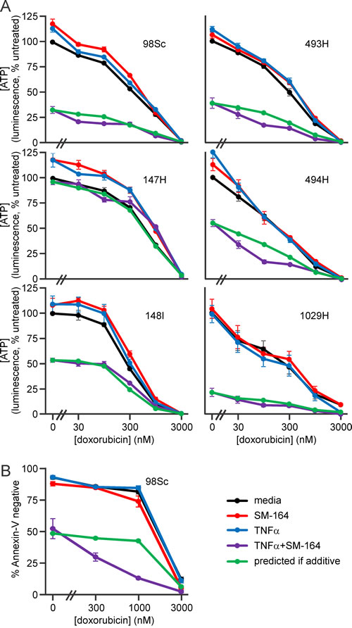Doxorubicin cooperates with SM-164 and TNFα co-treatment to kill primary murine osteosarcoma cells.