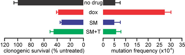 SM-164 does not induce mutations at the HPRT locus of TK6 cells.