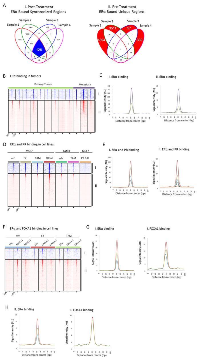 Binding profiles of 126 tamoxifen-synchronized regions (I) and unique pre-treatment regions (II).