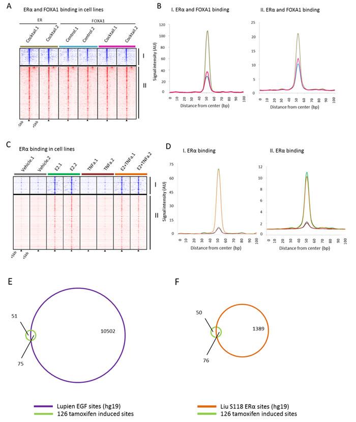Binding profiles of 126 tamoxifen synchronized regions (I) and unique pre-treatment regions (II) under mitogen conditions.