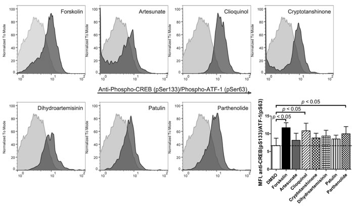 Binding of anti-phospho-CREB/AFT-1-specific antibody in response to ICE.