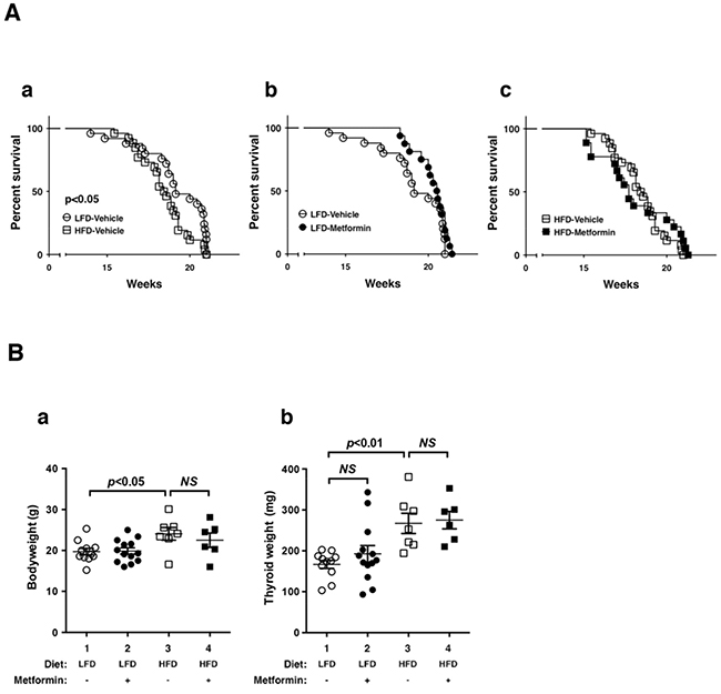 Effects of metformin on survival and thyroid tumor growth of LFD- or HFD- ThrbPV/PV Pten+/−mice.