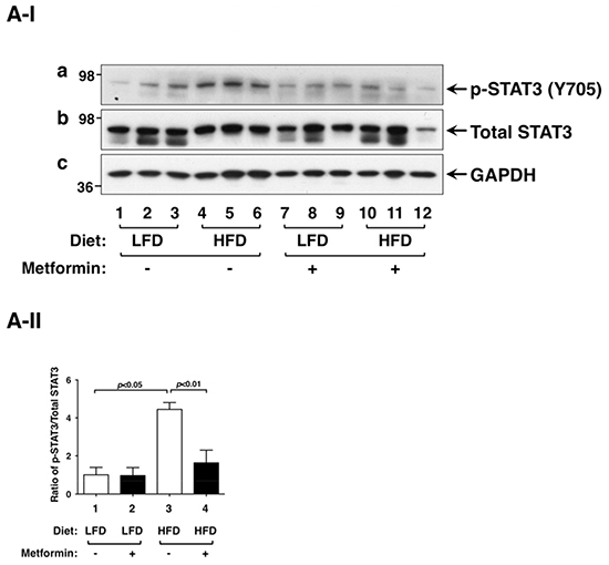Effect of metformin on STAT3 and p-STAT3 protein abundance in the thyroids of LFD- or HFD- ThrbPV/PV Pten+/−mice.