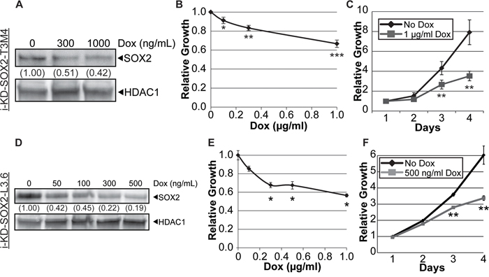 Knockdown of SOX2 in i-KdSOX2-T3M4 and i-KdSOX2-L3.6 cells reduces cellular growth.