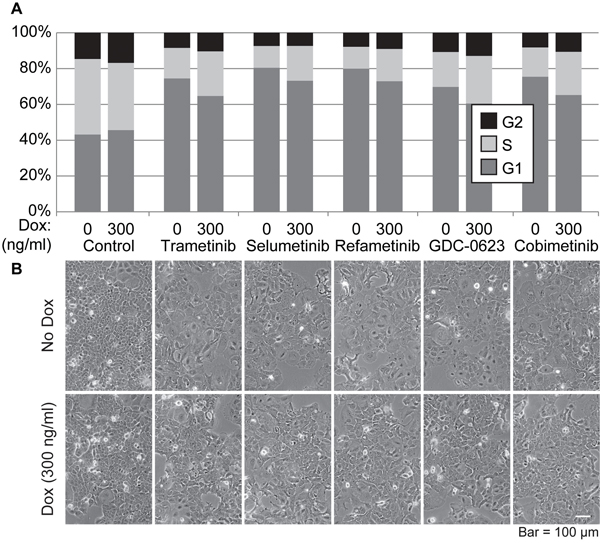Effects of SOX2 overexpression and treatment with MEK inhibitors on the cell cycle of i-SOX2-T3M4 cells.