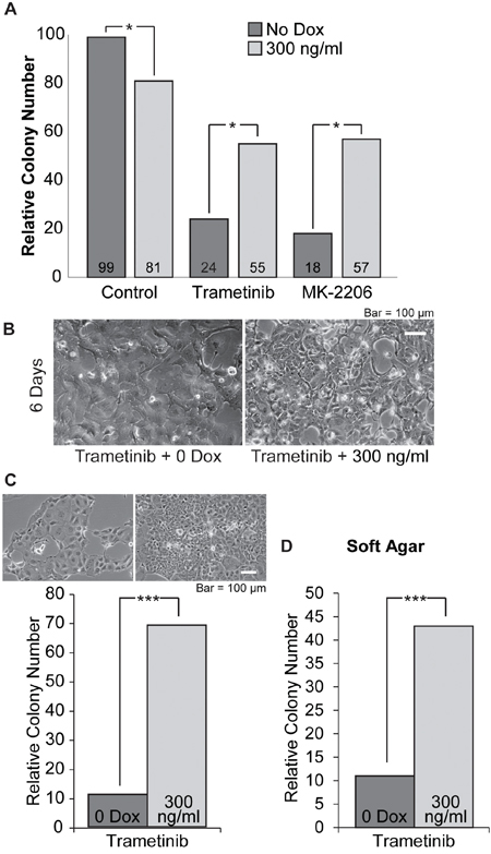 Cloning efficiency of i-SOX2-T3M4 cells is reduced by treatment with trametinib or MK-2206 and is partially reversed by overexpression of SOX2.