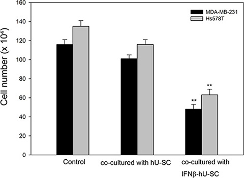 Effect of hUCMSCs and IFNβ-hUCMSCs co-culture on growth of MDA-MB-231 and Hs578T.