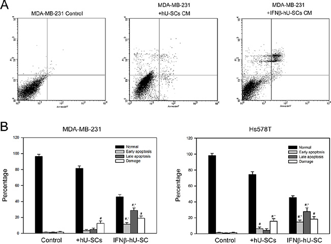 Effect of hUCMSCs or IFNβ-hUCMSCs conditioned medium on the induction of apoptosis in MDA-MB-231 and Hs578T.