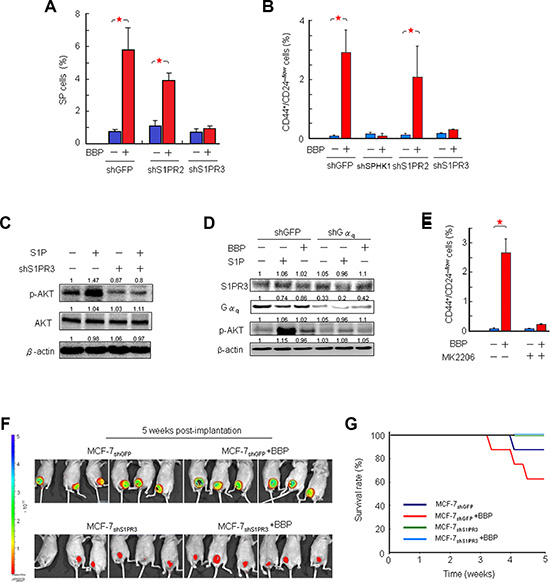 Correlation between S1PR3 and BCSC-mediated tumor formation in a mouse xenograft model.