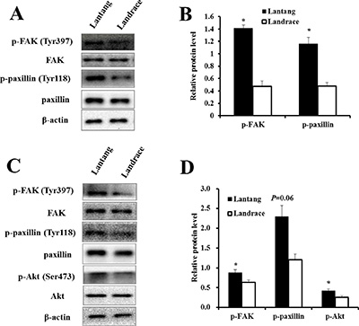 The protein expression of the FAK signaling pathway in the adhesion and migration assays.