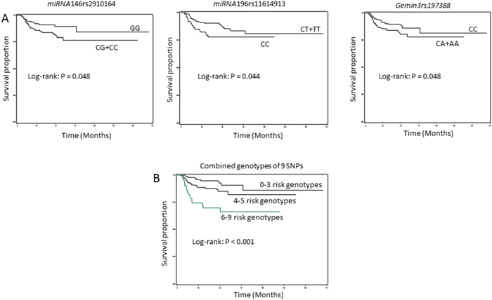 Figure 2A-B: Kaplan-Meier estimates of the cumulative recurrence rates in HPV-positive SCCOP patients by miRNA-related genotypes (N = 324).