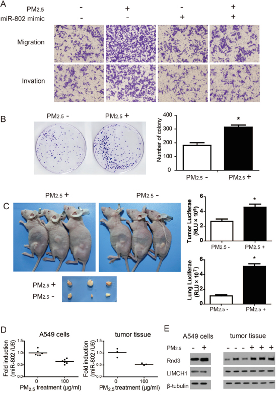 Long-term PM2.5 exposure regulates in vitro and in vivo A549 cell carcinogenesis and metastases.