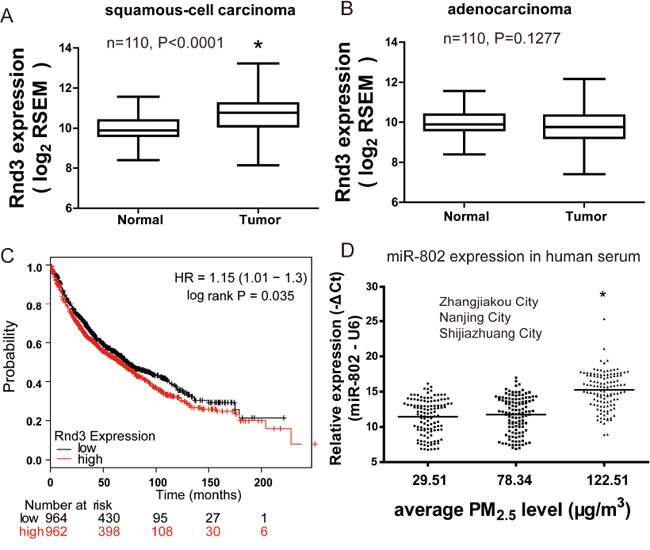 Rnd3 expression is up-modulated and unfavorable prognostic indicator in lung cancer.