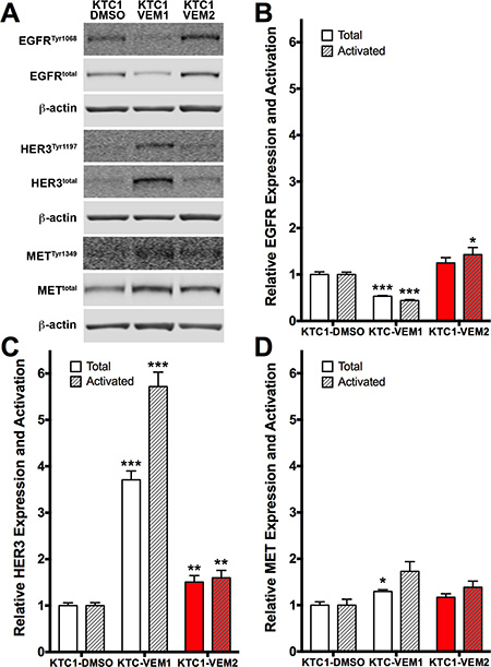 Receptor tyrosine kinase (RTK) expression and activation in KTC1 subpopulations following long-term exposure to DMSO (KTC1-DMSO) or vemurafenib (KTC1-VEM1 and KTC1-VEM2).