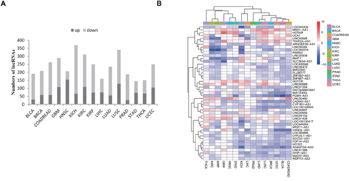 Identification of dysregulated lncRNAs in cancer.