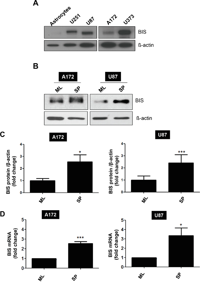 BIS induction under a specific culture condition that enriches GSC-like cells.