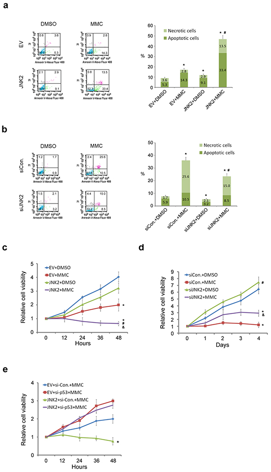 Decreased expression of JNK2 confers resistance to cell death induced by MMC