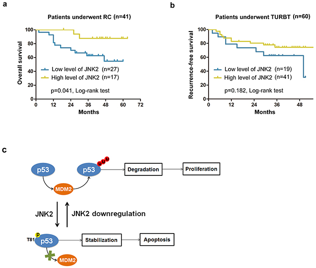 Survival analysis for patients with different expression levels of JNK2