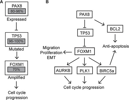 Altered pathways in HGSC compared to MOSE-PAX8 cells.