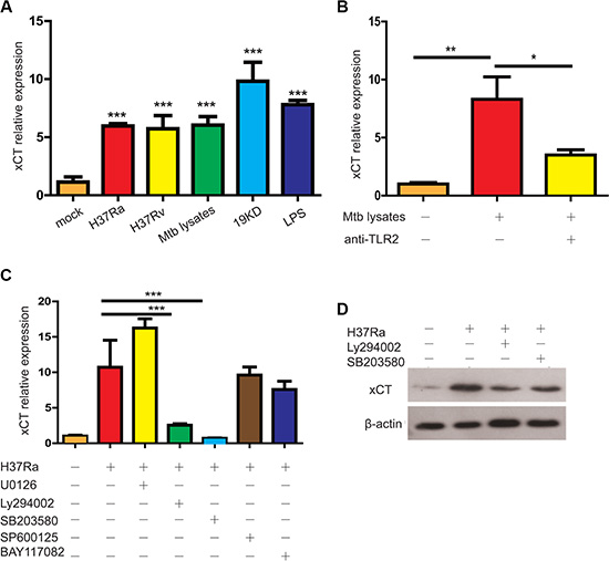 Mtb induced xCT expression in macrophage.