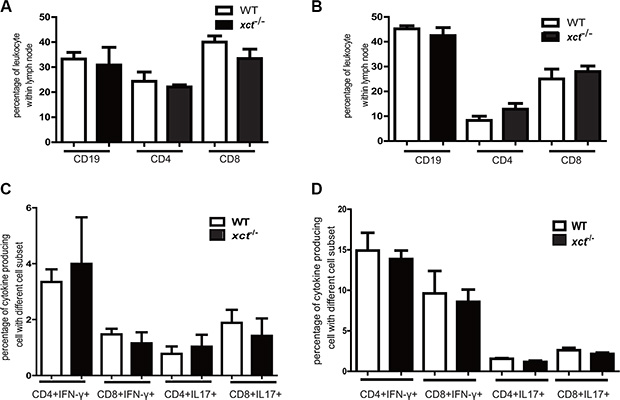 Disruption of xCT does not affect the adaptive immune response in mice infected with Mtb.