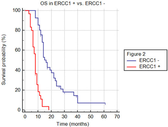 Overall survival (OS) in ERCC1+ versus ERCC1- population.