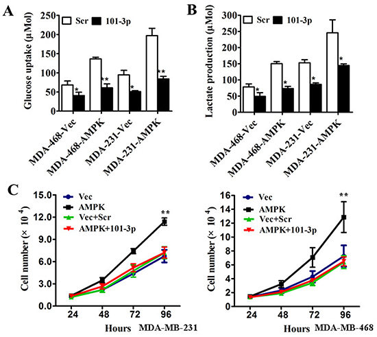 mir-101-3p-AMPK axis is a key regulator of tumor metabolism and inhibits proliferation in triple negative breast cancer in vitro.