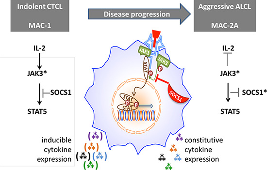 Proposed role of SOCS1 in modulating cytokine signaling via the JAK/STAT axis.