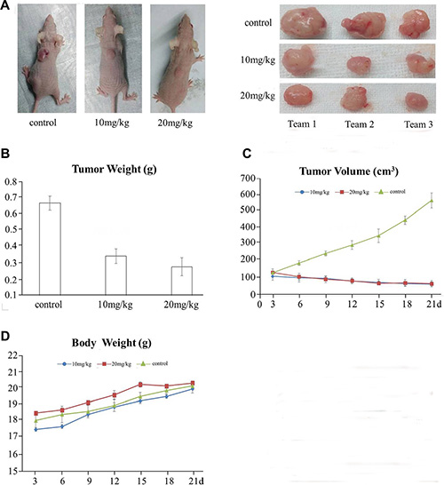 QPB-15e inhibits tumor growth in mouse xenografts.