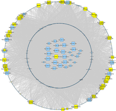 Network analysis of miR-34a.