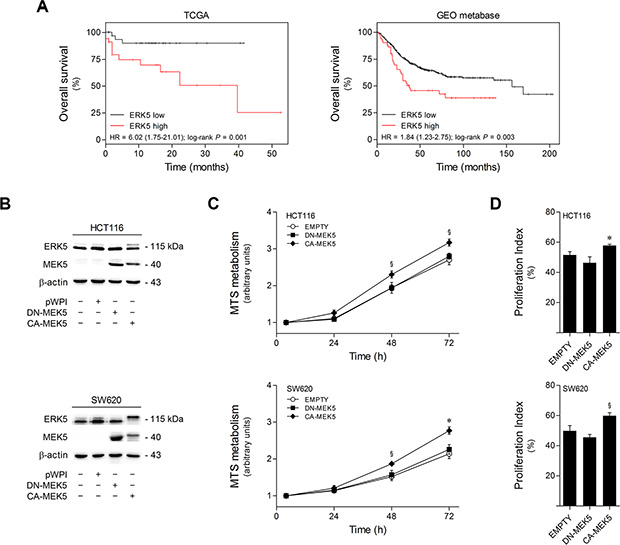 High ERK5 expression in colon cancer correlates with poor patient survival, and MEK5 constitutive activation increases colon cell proliferation.