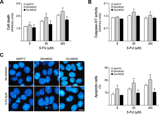 MEK5 differential activation modulates HCT116 cell sensitivity to 5-FU.