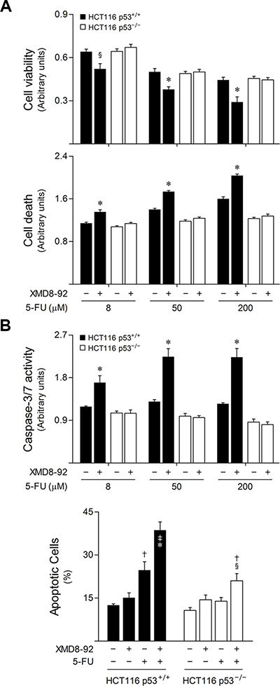 ERK5 inhibition increases 5-FU-induced apoptosis in a p53-dependent manner.