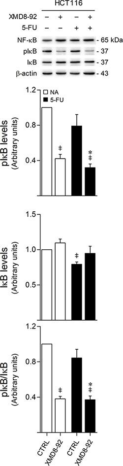 ERK5 inhibition decreases IκB phosphorylation.