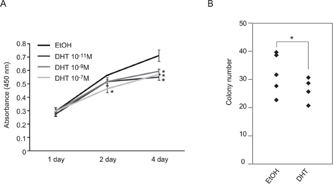 Suppression of TCam-2 cell proliferation by DHT treatment.