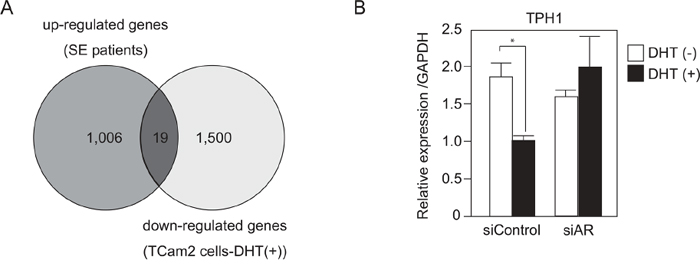 TPH1 was highly expressed in SE patients and down-regulated by DHT in SE cells.