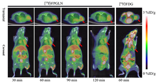Decay-corrected whole-body PET/CT fusion images acquired at different time points.