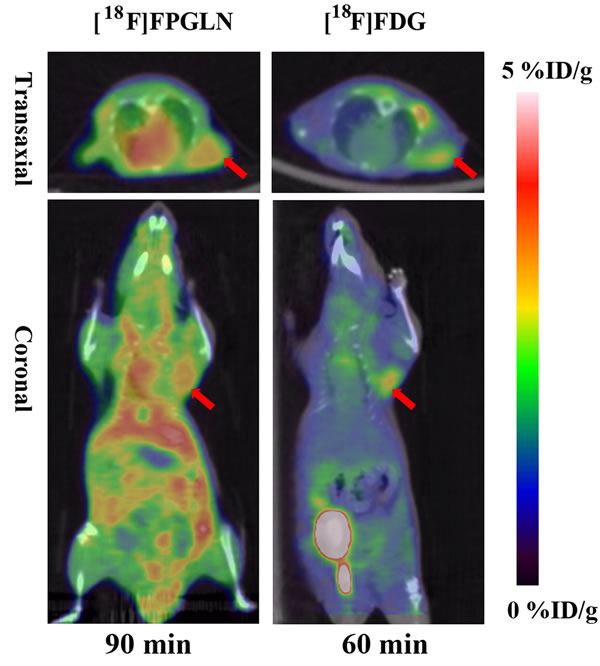 Decay-corrected whole-body PET/CT fusion images of PC-3 prostate cancer-bearing mice after the injection of [