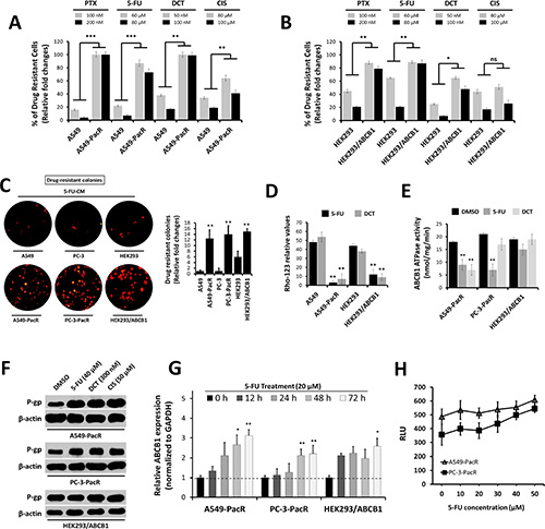 Occurrence of cross-resistance in PTX-resistant cancer cells is highly associated with ATP-dependent P-gp/ABCB1 efflux activity.