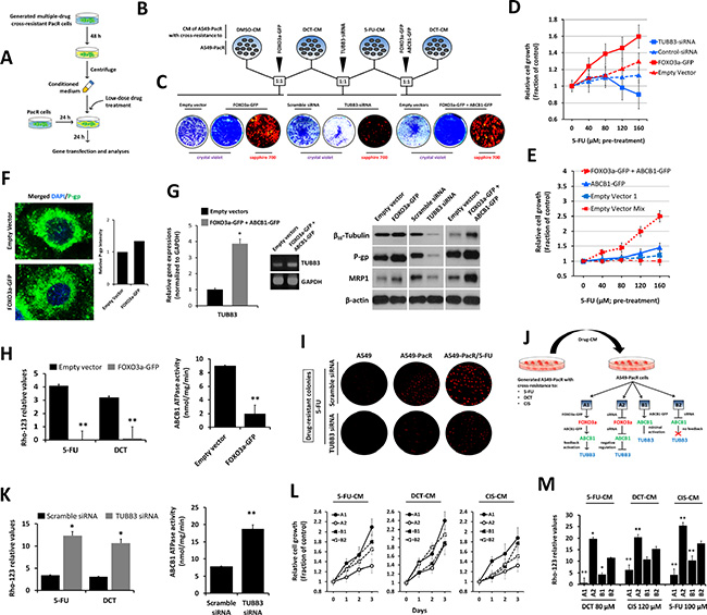 Drug-induced secretome factors influence MDR promotion of FOXO3a-regulated P-gp activity in PTX-resistant A549 cells with multiple cross-resistance.