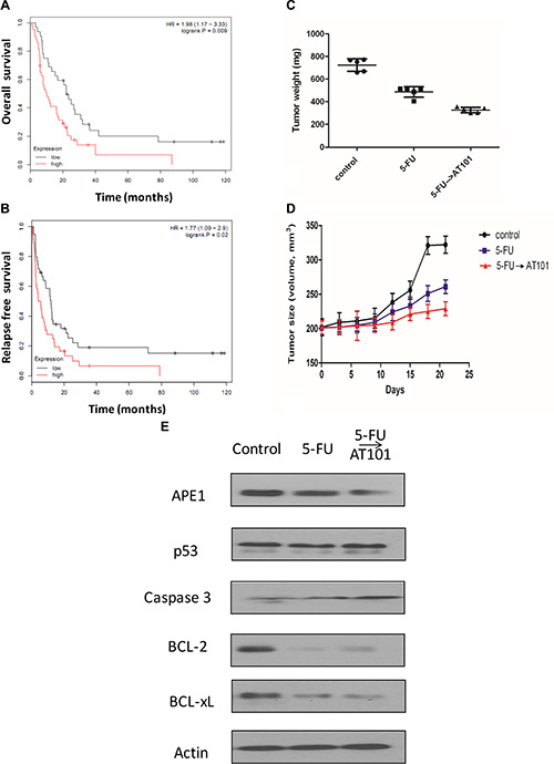 The role of AT101 in the treatment of Her-2 positive gastric cancer with 5-FU based therapy in vivo.