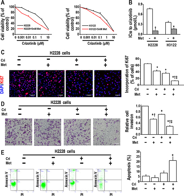 Metformin increased crizotinib sensitivity in crizotinib-sensitive human lung cancer cells.