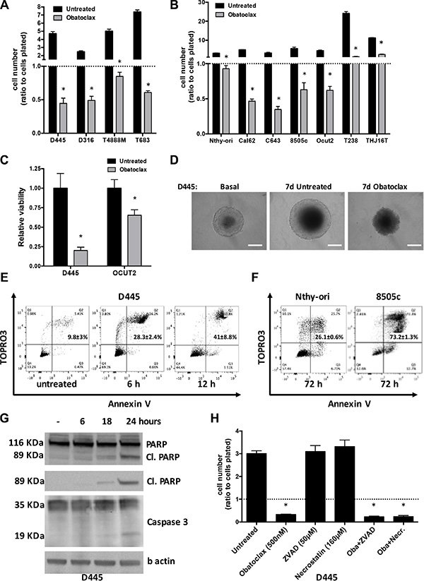 Obatoclax induces massive necrosis in mouse and human thyroid cancer cells.