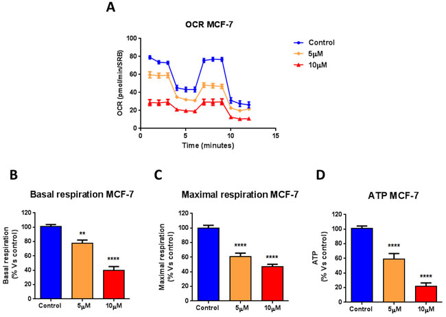 Atovaquone treatment inhibits the mitochondrial respiration of MCF7 breast cancer cells.