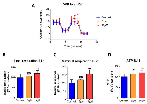Atovaquone treatment does not affect the mitochondrial respiration of normal human fibroblasts.