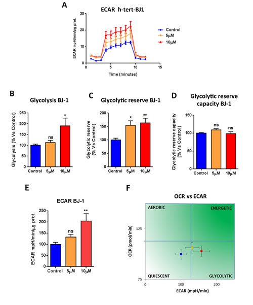 Atovaquone treatment increases glycolysis in normal human fibroblasts.