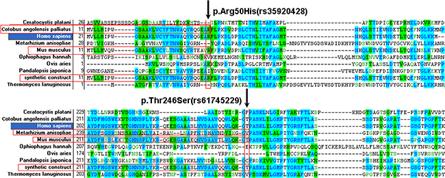 Conservation analysis of the CHIT1 protein sequences.